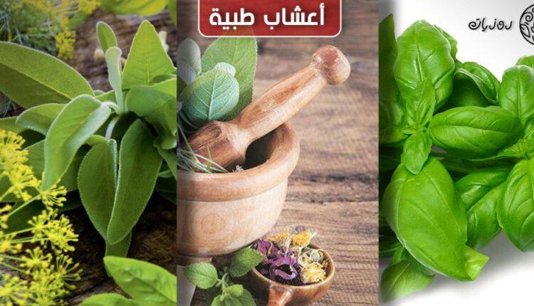 النباتات الطبية